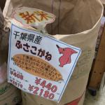 新米の千葉県産「ふさこがね」1kg を買って、炊いて、味わってみました