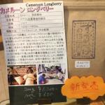 カメルーン産のコーヒー豆「ロングベリー」を味わう(すずのすけの豆)