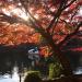 井の頭公園で秋の紅葉散策を楽しんできました